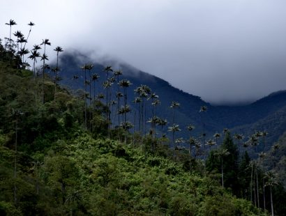 Valle de Cocora : beaucoup plus qu'une carte postale